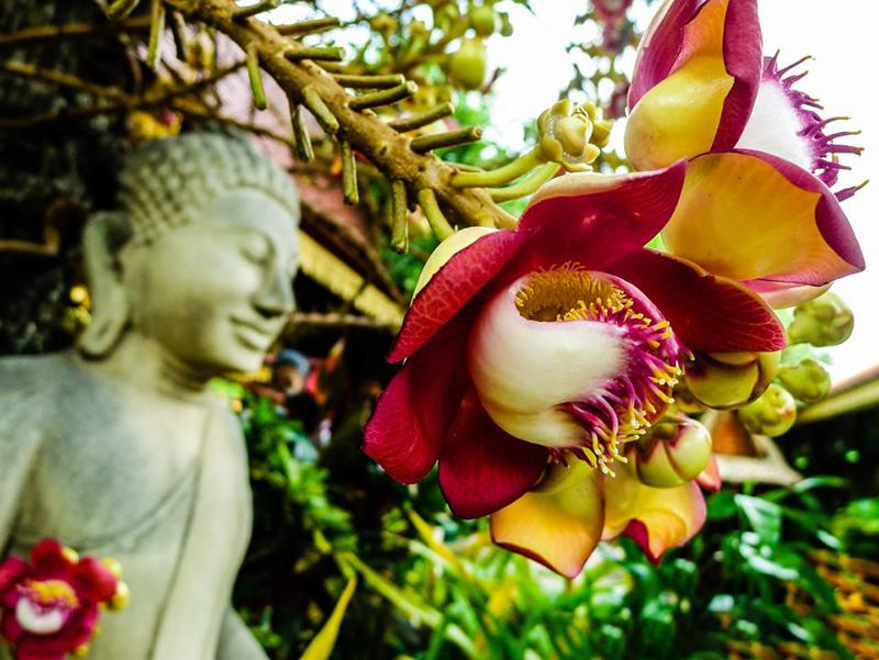 7 loại cây phong thủy dễ trồng và ý nghĩa của chúng