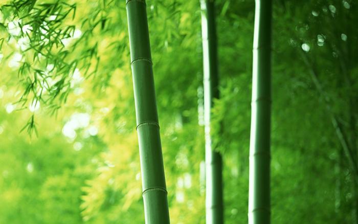 cây tre cũng chịu sự chi phối trực tiếp từ 5 yếu tố ngũ hành